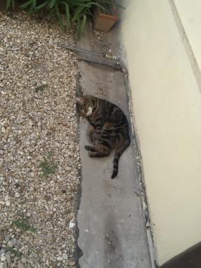 Cat-in-residence, Fragolina